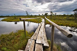 Ķemeri - Big Kemeri swamp national park.
