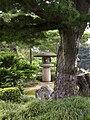 Kenroku tree.jpg
