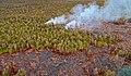 Kilauea Lava Flow - panoramio.jpg