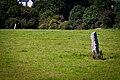 Kilmashogue Standing Stones.jpg