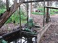 Kinneret swamps059 (5).jpg