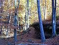 Kirkeler Wald 2003-11-06 03.JPG