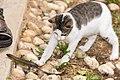 Kitty and Lizard (27047989069).jpg
