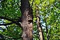 Kivertsi Volynska-Lisodub nature monument-Phellinus igniarius on Quercus.jpg