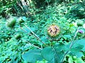 Kocie Gory plants (1).jpg