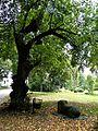 Kock park pałacowy 4.JPG