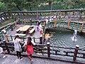 Koi pond in Shifen Waterfall Park 20190812c.jpg