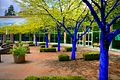 Konstantin Dimopoulos Blue Trees Port Moody.jpeg
