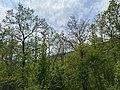 Kosmaj forest 16.jpg
