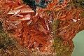 Krokoit mineralogisches museum bonn.jpg