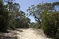 Ku-Ring-Gai Chase NSW 2084, Australia - panoramio (20).jpg