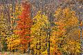 L'automne au Québec (8072505050).jpg