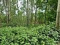 LSG Neuland Gebiets-NR. HH HH-2025 Westufer Neuländer See (23).jpg
