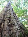 La Amistad Panama Biosphere Reserve - Parque Nacional Volcan Baru (a core zone) 32.JPG