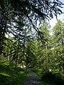 La Roya Casterino Vallon Fontanalba Vers Vallee Merveilles 06072015 - panoramio (1).jpg