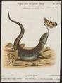 Lacerta ocellata - 1700-1880 - Print - Iconographia Zoologica - Special Collections University of Amsterdam - UBA01 IZ12400091.tif