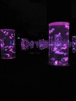 Manila Ocean Park - Jellies Exhibit