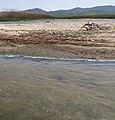 Lake Picrolimni 8.jpg