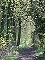 Lane between the woods - May 2012 - panoramio.jpg