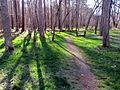 Laurel Bluffs Trail Eno River SP 6185 (7188129384).jpg