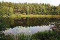 Leśne oczko wodne, okolice Skarszew (2) - panoramio.jpg