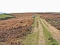 Lead Mining Trail on Edmondbyers Common - geograph.org.uk - 157151.jpg