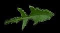 Leaf of Sonchus oleraceus.png