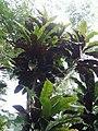 Leaves and trees palavangudi jpg 13.jpg