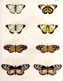 Lepidoptera-Humboldt-T041.png