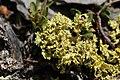Lichen (20579072742).jpg