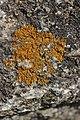 Lichen (29240662017).jpg