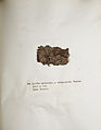 Lichenes Helvetici IX X 1833 005.jpg
