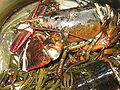 Lobster 04.jpg