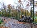 Logging in beechwood - geograph.org.uk - 1056476.jpg