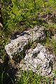 Lueneburg IMGP9666 wp.jpg