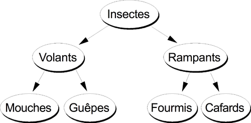 Figure 17: Classification d'insectes