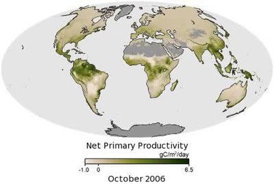 which ecosystems have the highest productivity per unit area