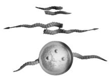 Maduvu Weapon