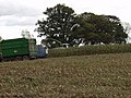Maize harvesting - geograph.org.uk - 598689.jpg