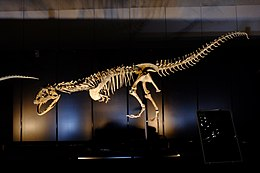 Majungasaurus in Japan.jpg