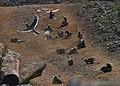 MalabarPiedHornbill Dustbath.jpg