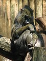 Mandrill - I still remember the default texture that came with TrueSpace 2 (540042392).jpg