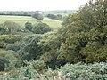 Mature woodland - geograph.org.uk - 1001934.jpg