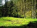 May Hochschwarzwald Mount Kandel 1300 mtr wilderness - Master Mythos Black Forest Photography 2013 former bear land - panoramio (2).jpg