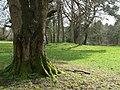 McCauley Park, Omagh - geograph.org.uk - 1196383.jpg
