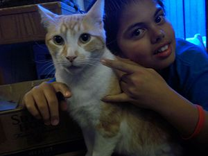 English: This is a picture of my cat and me. I...