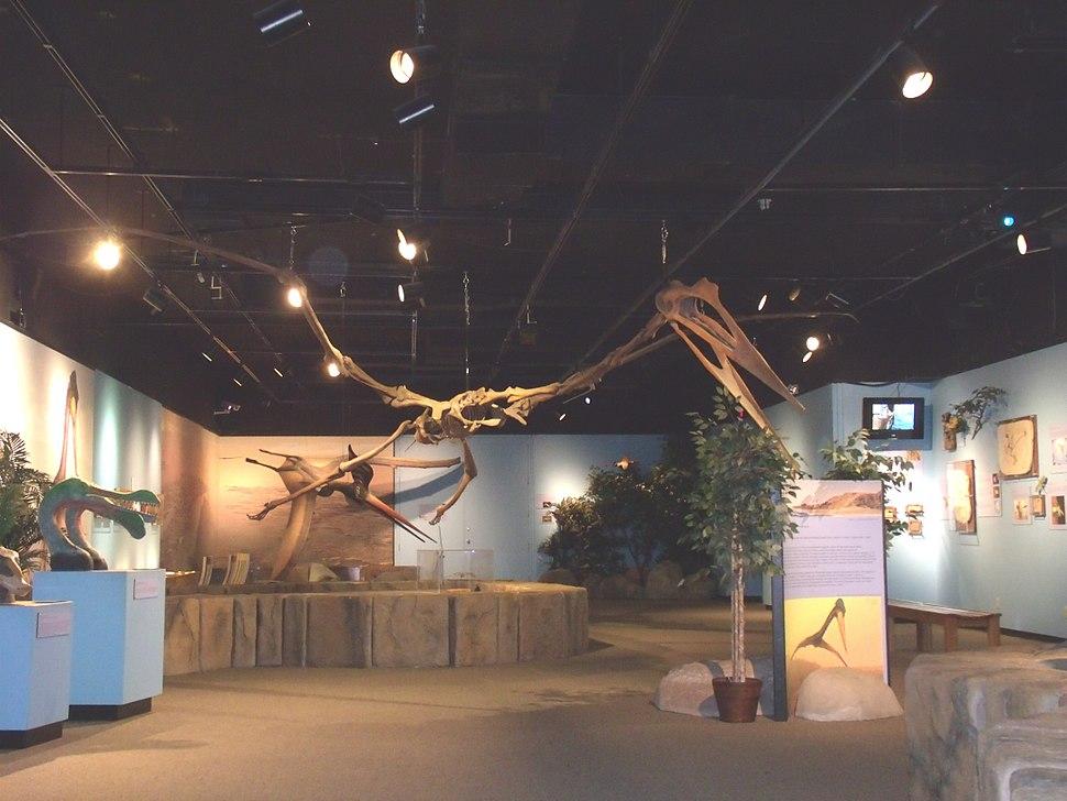 Mesa-Museum of Natural History-Pterosaurs