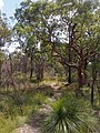 Milyerra Road Fire Trail - panoramio (9).jpg