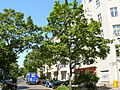 MoabitWiclefstraße-4.jpg