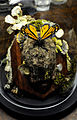 Monarch Butterfly Taxidermy 07.jpg